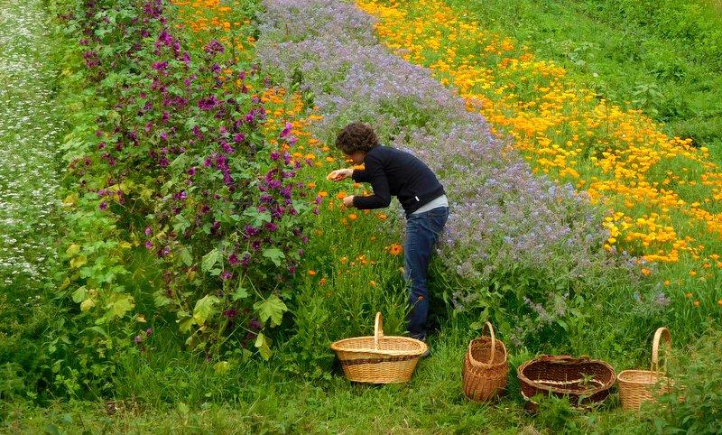Marion en train de récolter des fleurs