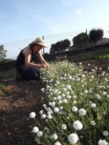 Marion cueillant des fleurs de Camomille