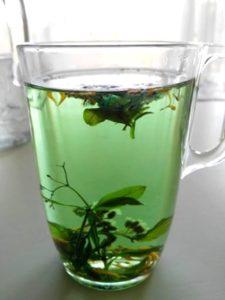 Mug, tisane, vers, plantes sèches, infusion